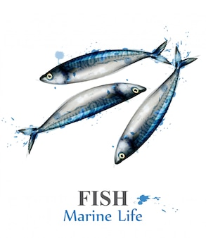Aquarelle de poisson maquereau