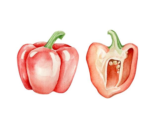 Aquarelle de poivron rouge et la moitié de poivre.paprika