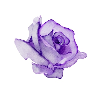Aquarelle rose pourpre