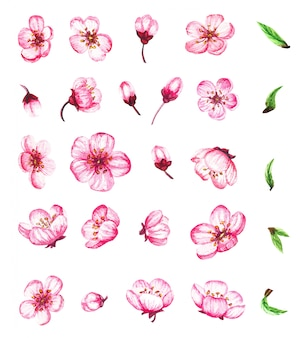 Aquarelle sertie de fleurs et de feuilles de sakura, fleur de cerisier.
