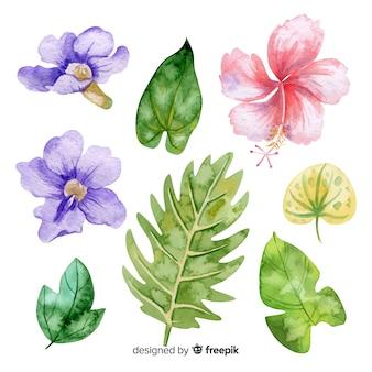 Aquarelles fleurs et feuilles tropicales