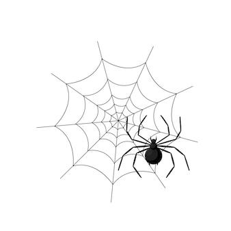 Araignée dans le web isolé sur fond blanc.