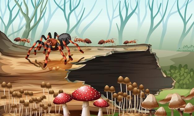 Araignée et fourmis dans les bois