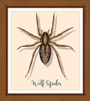 Araignée-loup dans un cadre en bois