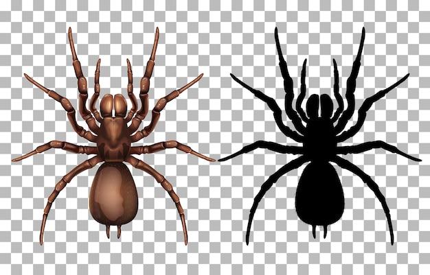 Araignée sur transparent