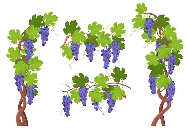 Arbre d'absinthe. branches de glycine en fleurs et bouquets d'éléments de fleurs pour la conception. vecteur