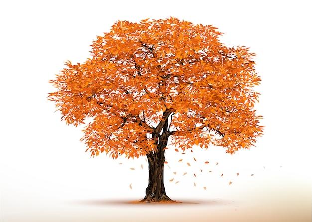 Arbre automne. arbres réalistes isolés sur blanc.