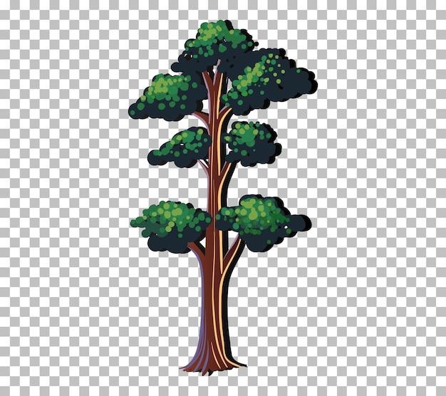 Un arbre aux feuilles vertes sur fond transparent