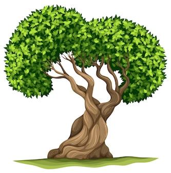 Arbre aux feuilles vertes