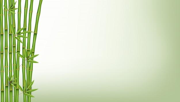 Arbre en bambou chinois. plante asiatique tropicale.