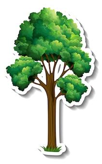Un arbre avec des feuilles vertes autocollant sur fond blanc