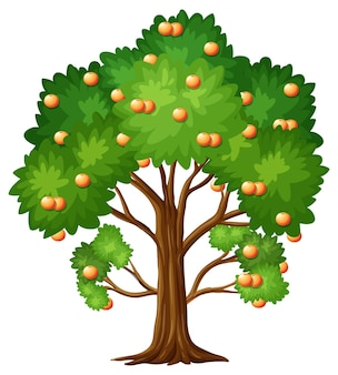 Arbre fruitier orange en style cartoon isolé sur blanc