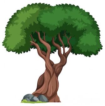 Un arbre isolé au fond de la nature