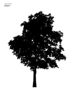 Arbre silhouette isolé sur fond blanc. utilisation d'idées d'objets de parc et d'extérieur pour l'aménagement paysager, la décoration architecturale. illustration vectorielle.