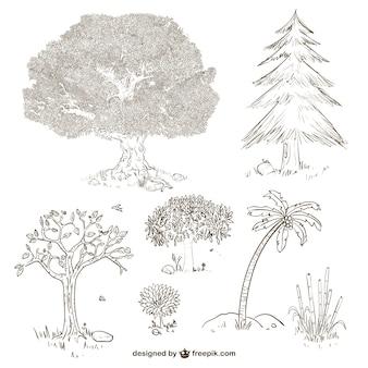 Les arbres et les plantes dessins