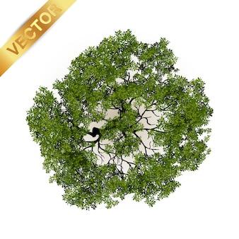 Arbres vue de dessus pour illustration vectorielle de paysage.