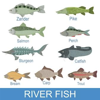 Ardoise d'identification des poissons de rivière avec noms
