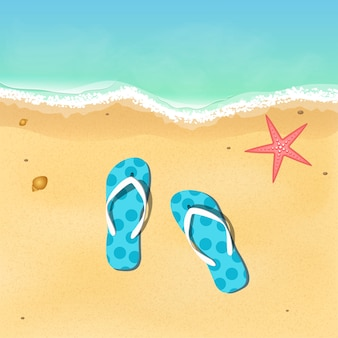 Ardoises et étoiles de mer sur la plage.
