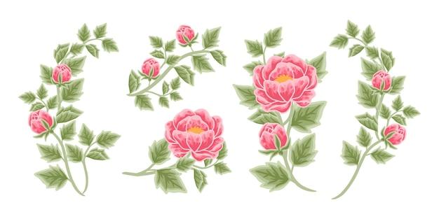 Arrangement de fleurs de pivoine dessinés à la main et collection d'éléments de bouquet