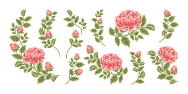 Arrangement de fleurs roses dessinés à la main et collection d'éléments de bouquet