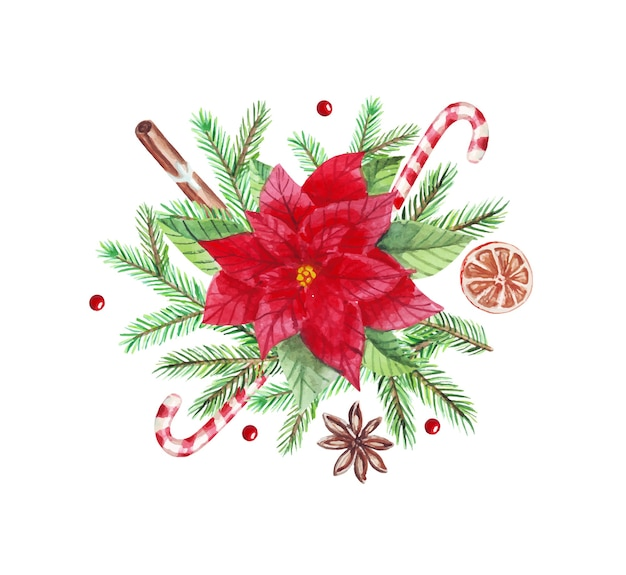 Arrangement de noël aquarelle avec des branches de sapin vert, poinsettia, cannelle, bonbons, cardamome.