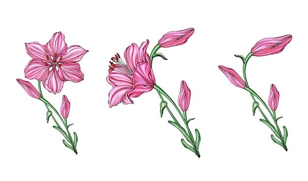 Arrangements floraux de vecteur avec des fleurs de lys.