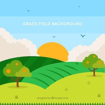 Arrière-plan de champ d'herbe dans les tons verts