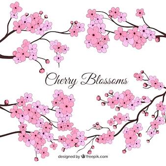 Arrière-plan dessiné à la main de fleur de cerisier