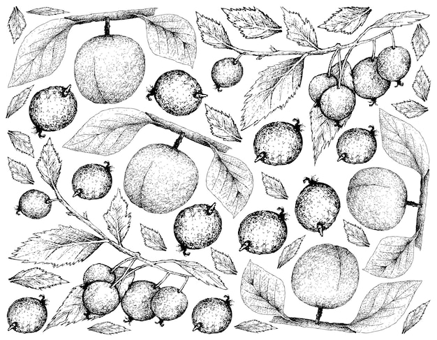 Arrière-plan dessiné à la main des fruits de l'arbre apricote et de l'ortie européenne