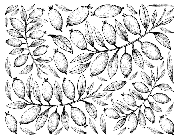 Arrière-plan dessiné à la main de fruits arrayan frais