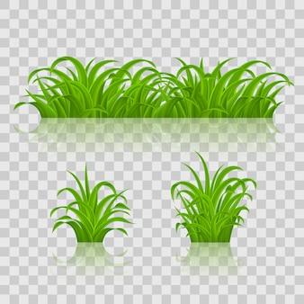 Arrière-plans d'herbe verte. sur fond transparent