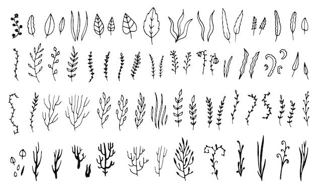 Art botanique dessiné à la main. collection d'éléments de croquis graphiques floraux. feuilles et branches