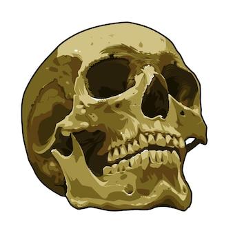 Art de crâne réaliste anatomie