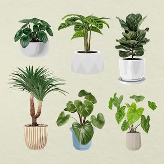 Art vectoriel végétal, plante d'intérieur dans des pots de fleurs