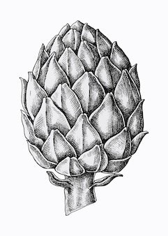 Artichaut frais dessiné à la main
