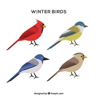 Assortiment d'oiseaux d'hiver en design plat