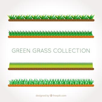 Assortiment de plats frontières d'herbe avec des conceptions différentes