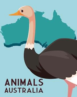 Autruche continent australien carte illustration de la faune animale
