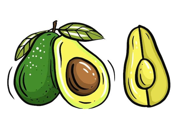 Avocat en style cartoon. illustration vectorielle