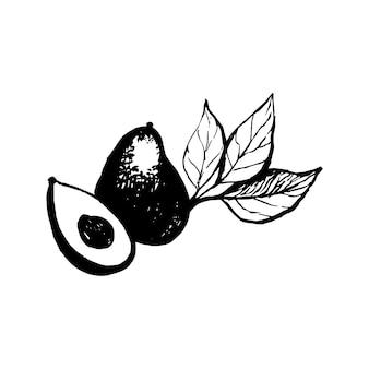 Avocat vecteur dessiné à la main sur fond blanc illustration tropicale concept alimentaire