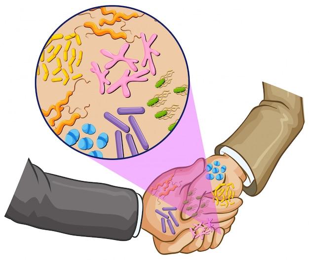 Bactéries en se serrant la main