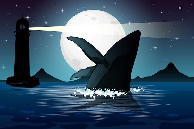 Baleine à bosse dans la silhouette de la scène de la nature