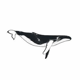 Baleine doodle dessiné à la main