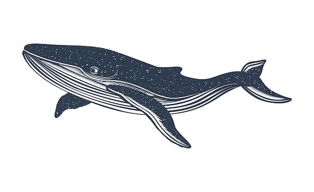 Baleine peinte à la main. baleine et baleine à bosse.