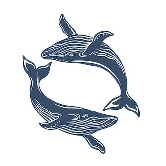 Baleines bleues isolées