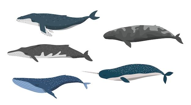 Baleines sur fond blanc illustration
