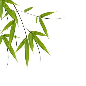 Bambou, feuilles, illustration illustration avec des objets isolés