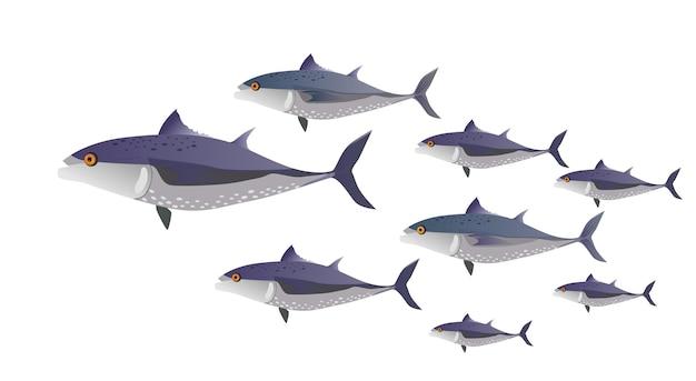 Banc de poissons (thon) en couleur. poissons de différentes tailles - illustration vectorielle à plat.