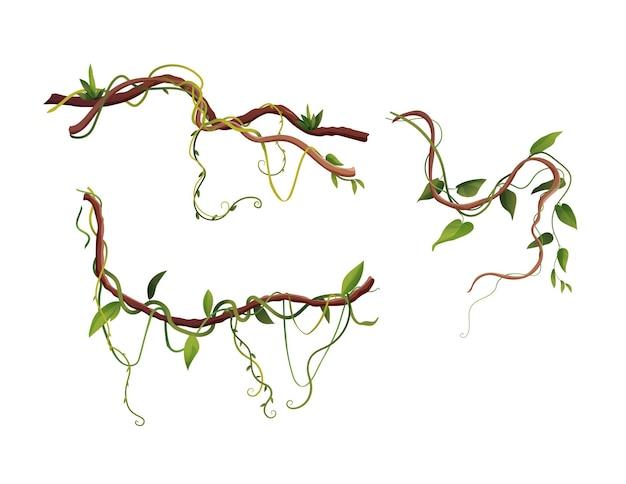 Bande dessinée de branches d'enroulement de liane ou de vigne