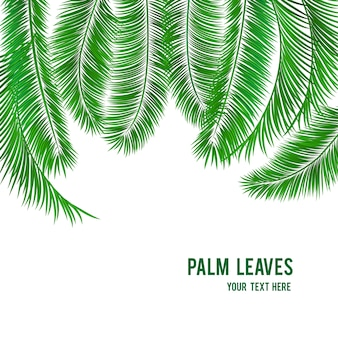 Bannière de fond palmier tropical